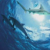 Подводный мир :: irina Schwarzer