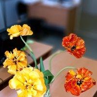 Тюльпаны :: Виктор Орехов
