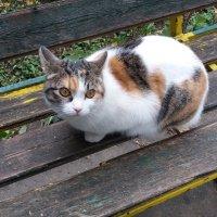 Присела в парке на скамейку :: Galina Solovova