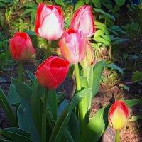Долго расцветали.. :: Фотогруппа Весна-Вера,Саша,Натан