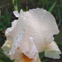 Дождливый день :: Татьяна Лютаева