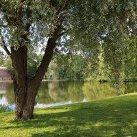 Летний день, парк :: ZNatasha -