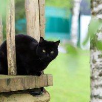 cat :: Андрей Богданов АндиСтудия.РФ