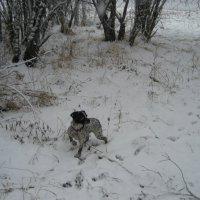Маленький охотник :: Anna Ivanova