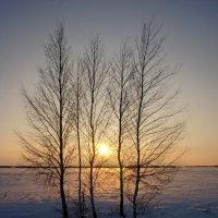 Зима,закат. :: сергей
