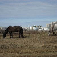 Ходят кони :: Anna Ivanova