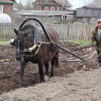 Пашем огород... :: Александр Широнин
