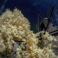 В лиственных объятиях :: Николай Гирш