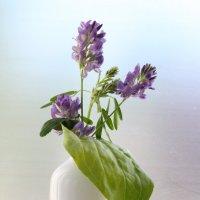 Полевые цветы. :: Нина Сироткина