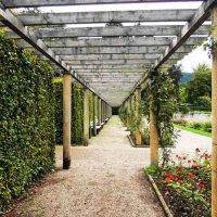 Розарий сада..увитая плетёная аркада, и  аромат разлитый сотен роз.. :: Гала