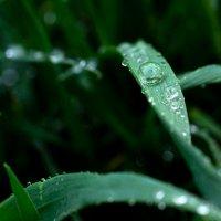 Капельки дождя :: Виктор Фельдшеров