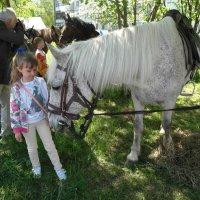 любовь к лошадям :: Владимир