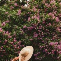 Сиреневый рай :: Каролина Савельева