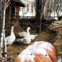 Гуси рождественские. :: Sergii Ruban