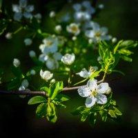 Весна в московских парках (№9) :: Absolute Zero