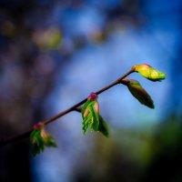 Весна в московских парках (№10a) :: Absolute Zero
