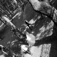 Идем за синей птицей ... :: Лариса Корж