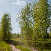 Лесная дорога :: Владимир Новиков