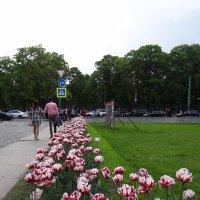 прогулки по городским улицам :: Anna-Sabina Anna-Sabina