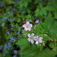 цветы леса :: Валентина. .