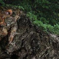 Кого только не встретишь на  деревьях. :: Елена Миронова