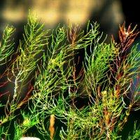 травы-муравы :: Oleg Ustinov