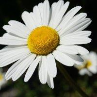 День летнего солнцестояния :: Alm Lana