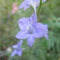 летние цветы :: Алексей Кузнецов