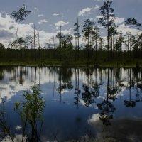 Лесное озеро :: Андрей К