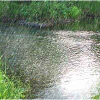 Летний дождь. :: Александр Шимохин