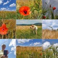 я хочу сфотографировать мака .. :: Heinz Thorns