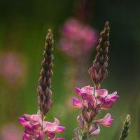 Какие то милые цветочки :: Андрей + Ирина Степановы