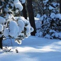 Зимняя свежесть. :: игорь кио