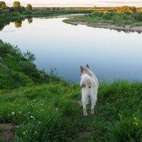 Послушай, река! :: Татьяна Копосова