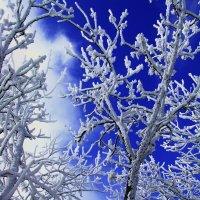 Космический холод. :: игорь кио