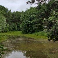 Речка в парке-2 :: Андрей К
