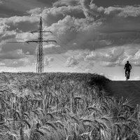В полях :: Konstantin Rohn