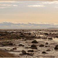 Камни Белого моря. :: Марина Никулина