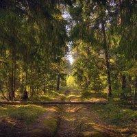 По лесным дорогам :: Алексей (GraAl)