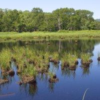 болотце - место гнездования уток :: Александр Белов