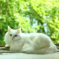 Моя кошка Белка. 30.06.2020г. :: Виталий Виницкий
