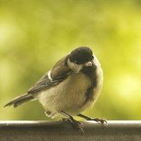 Птичка невеличка... :: Андрей