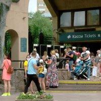 После самоизоляции народ массово посещает Московский Зоопарк. :: Елена