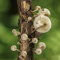 У каждого муравья своя спутниковая тарелка ! :: Денис Антонов