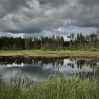 Заливной луг в Карананском Бору :: Рустам Илалов