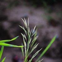 Травы луговые :: Irene Irene