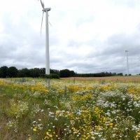 поле диких цветов, пчелиное пастбище :: Heinz Thorns
