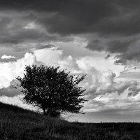 Дерево . Дерево на холме . Ч.б . Контурная фотография. :: Zefir58 Verx