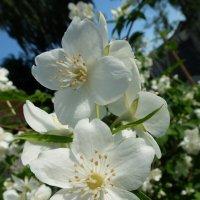 Счастливый цветок :: Людмила Alex