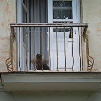 кот балконный :: Лера